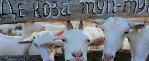"""Ферма """"Бабины козы"""""""